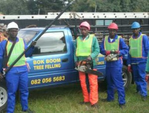 The team of bokboom ready to fell another tree